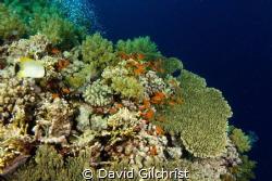 A view of Daedalus Reef in the Red Sea,Egypt by David Gilchrist