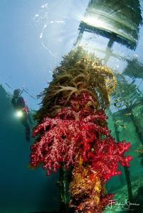 beneath Arborek jetty, Raja Ampat. by Filip Staes