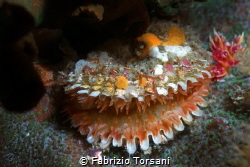 A nice clam, taken just before the closure by Fabrizio Torsani