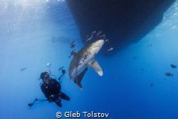 Diving with oceanic white tip shark by Gleb Tolstov