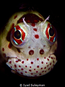 Blenny from Ishigaki by Iyad Suleyman