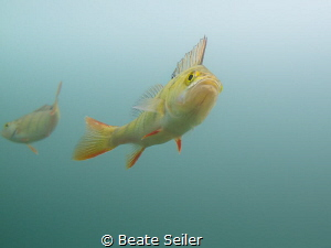 Perch by Beate Seiler