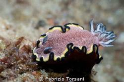 A nice nudibranch by Fabrizio Torsani