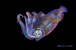 Colorful Squid by Bailiang Li