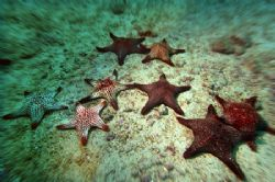 starfish - galapagos/wolf island by Manfred Bail