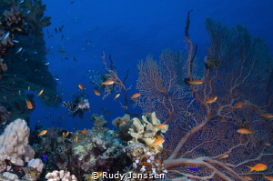 Lion fish in a view by Rudy Janssen