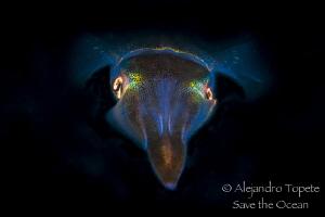 Squid in Black, Veracruz México by Alejandro Topete