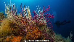 reeflife........Mediterranean sea by Claudia Weber-Gebert
