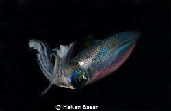 This image has been taken at night dive in Antalya. by Hakan Basar