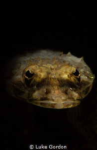 Flathead Portrait by Luke Gordon