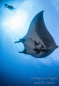 Mantaray with Diver and Sun, Roca Partida México by Alejandro Topete
