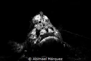 Survival by Abimael Márquez