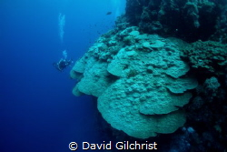 A wide angle view of giant coral formations in the Red Sea. by David Gilchrist