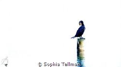 Lifeline by Sophia Tellman
