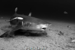 A constant debate: Are sharks a threat to humans? Or are ... by Cintia Campos