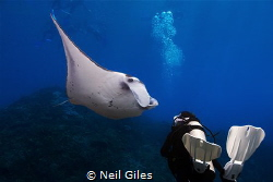 This picture is of my girlfriend and a Manta Ray, she was... by Neil Giles