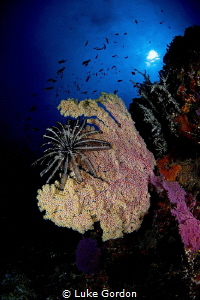 Bali reefscape at Crystal Bay by Luke Gordon