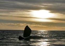 Northern Right Whale , Patagonia / Puerto Pirámides - Sun... by Ralf Levc