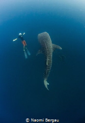 I Can Be Bigger | Freediving off the coast of Koh Tao we ... by Naomi Bergau