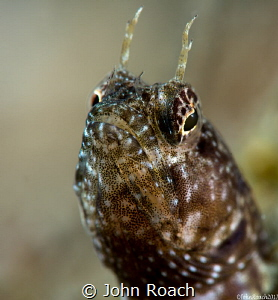 Yes I am....