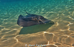 Grand Cayman by Alison Ranheim