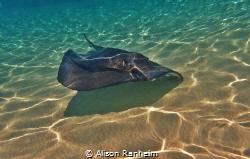 Grand Cayman by Alison Ranheim
