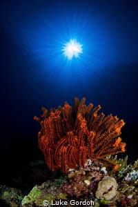 Orange and Blue - Sunburst by Luke Gordon