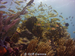 An amazing trip to Molasses Reef. Key Largo, Fl by Griff Gainnie