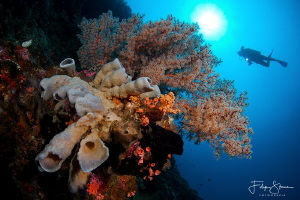 At the drop-off, Bunaken, Sulawesi. by Filip Staes