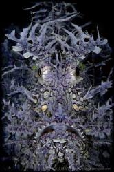 F A C E - O N Weedy Scorpionfish (Rhinopias frondosa) ... by Irwin Ang