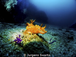 nudibranch shot with my canon g 12 with wide angle setup ... by Jurgens Swarts