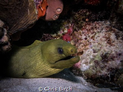 Green Moray Penon Reef Bayahibe with canon g7x and single... by Chris Birch