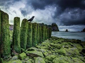 Nevermore.. tough beach entry. by Steven Miller