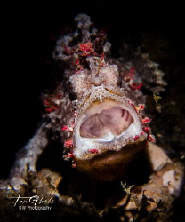 LAUGHING... Frog Fish by Ton Ghela