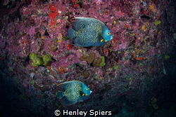 Fish Romance by Henley Spiers