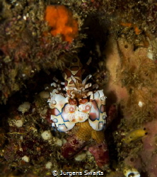 i found this guy diving at one of my favorite sites!Harle... by Jurgens Swarts