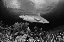 Is Shark Week Good? by Henley Spiers