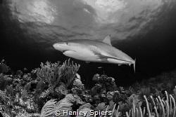 Is Shark Week Good? by Henley Spiers
