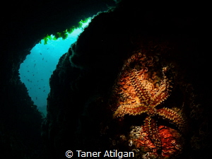A small cavern from Neandros Island/Istanbul by Taner Atilgan