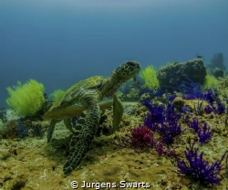 This guy was just posing for me, on a private dive in the... by Jurgens Swarts