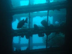 """""""Promenade Deck"""" Whilst penetrating the hull of the S.S P... by Damien Preston"""