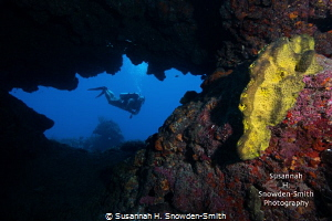 A diver explores a colorful swim through at Cinderella's ... by Susannah H. Snowden-Smith