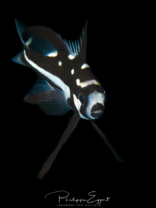 MIDNIGHT - SNAP