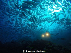 Loads of jack fish around Dirty Rock. by Rasmus Madsen