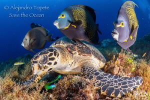 Turtle with angels, Cozumel Mexico by Alejandro Topete