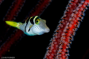 File fish in hiding! by John Parker