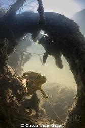 toads kingdom....... by Claudia Weber-Gebert