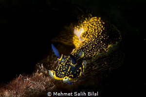 Walking through the light.