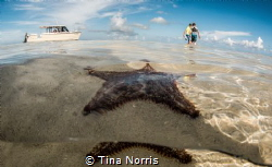 Starfish and Friends! At first, I was a tiny bit frustrat... by Tina Norris
