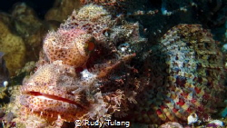 pinky rock fish by Rudy Tulang